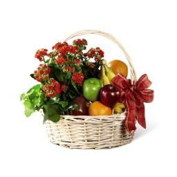 Canasta con palnta kalanchoe y frutas de estacion