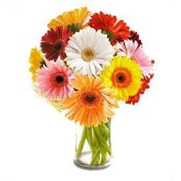 Florero con 12 gerberas de diferentes colores.